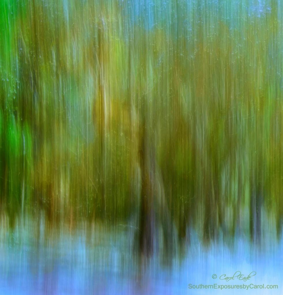 Enchanted Cypress Forest - ID: 15426607 © Carol Eade