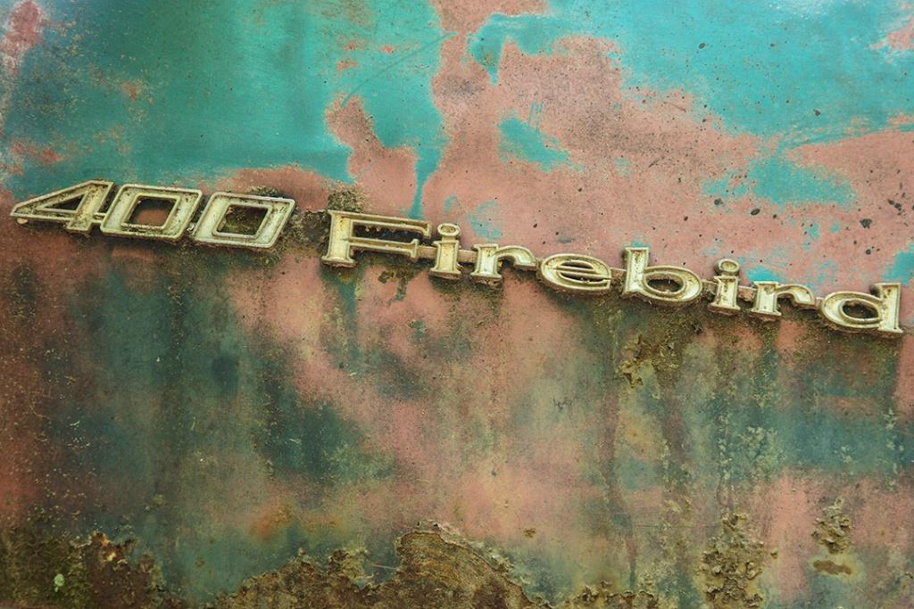 Firebird - ID: 15426935 © Rebecca A. Cummings