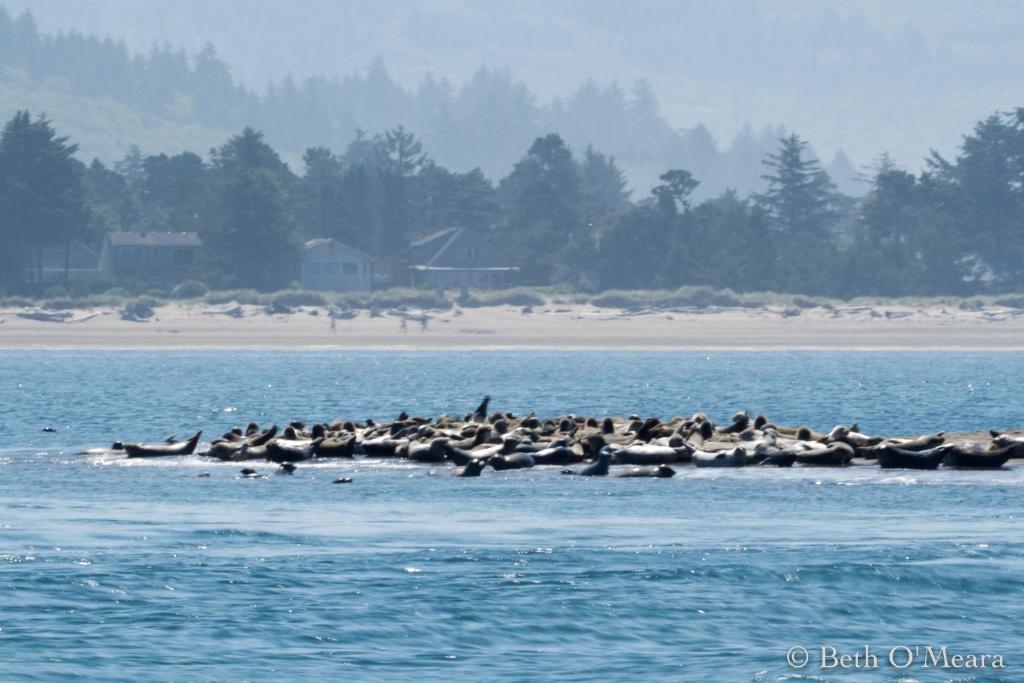 Sea Lion Social