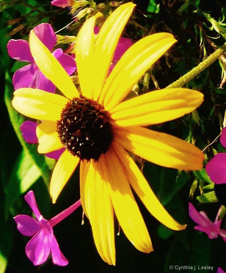 pretty yellow daisey