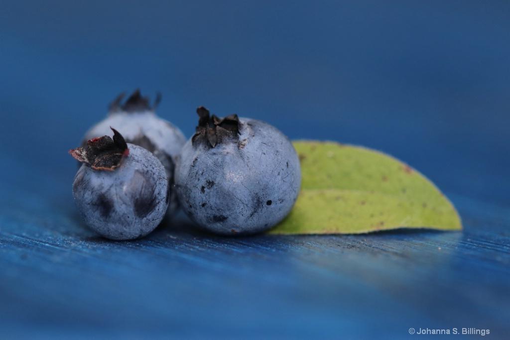 Blueberry Still Life - ID: 15433732 © Johanna S. Billings