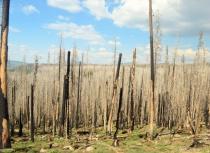 Devastation in Mt. Lassen