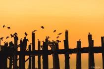 Crows feeder