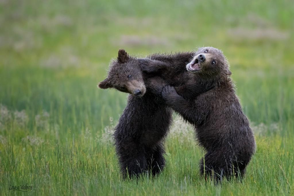 Stop Choking Me! - ID: 15445683 © Louise Wolbers