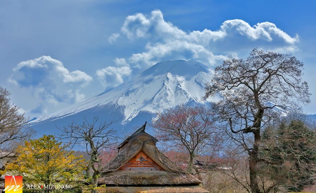 Oshino Fuji