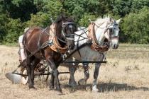 Two Horsepower