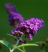 Front Yard Flower...