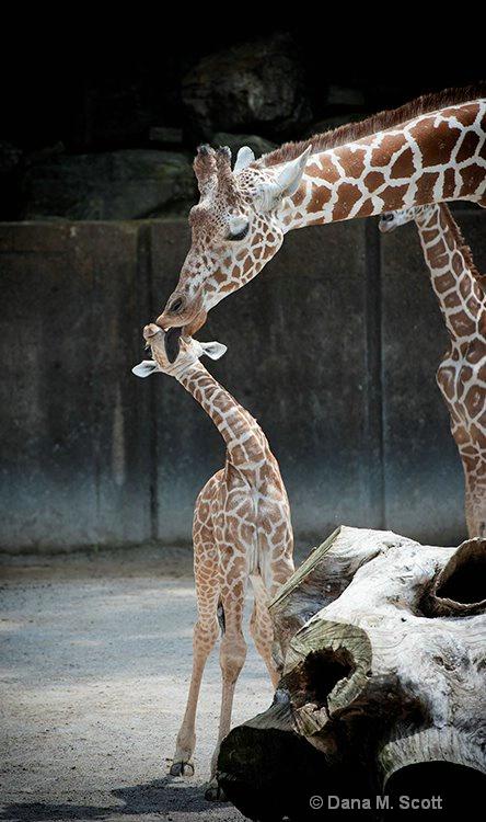 Mommy Kisses - ID: 15450635 © Dana M. Scott