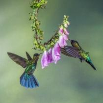 Flying jewels