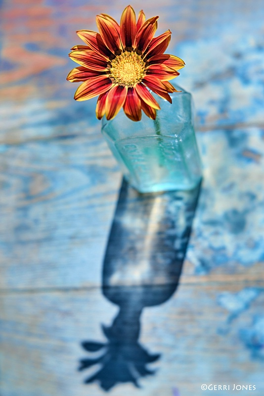 Gazania In A Bottle