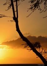 Sunset Orange Silhouette