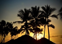 Sunset with Palm Silhouettes