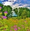 Prarie Flowers