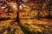 Autumn Morning Su...