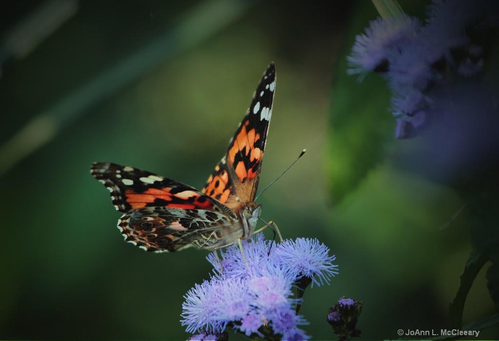 Autumn's Garden - ID: 15457343 © JoAnn L. McCleeary
