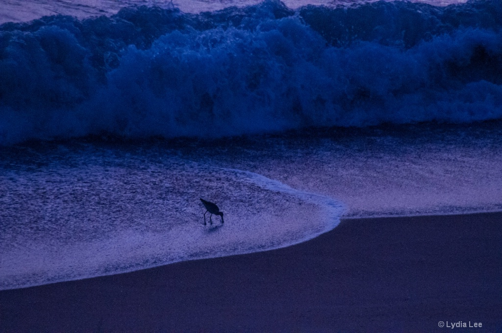 Bird Surfin' - ID: 15457645 © Lydia Lee