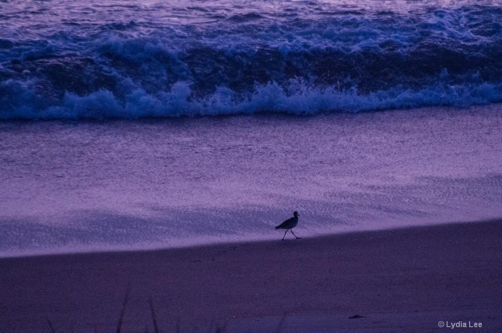 Morning Stroll on the Beach - ID: 15457648 © Lydia Lee