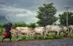 A herders' da...