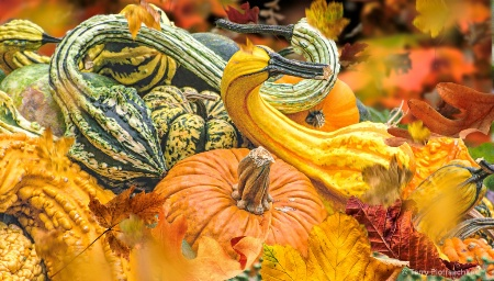 Dance To The Music Of Fall
