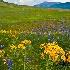 © Phil Burdick PhotoID # 15460679: Crested Butte CO