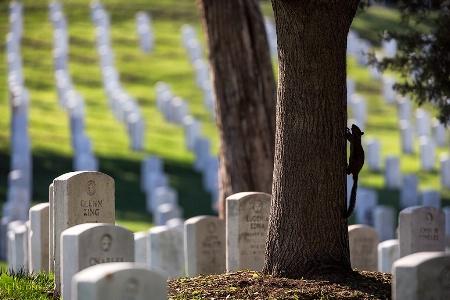 Cemetery Squirrel