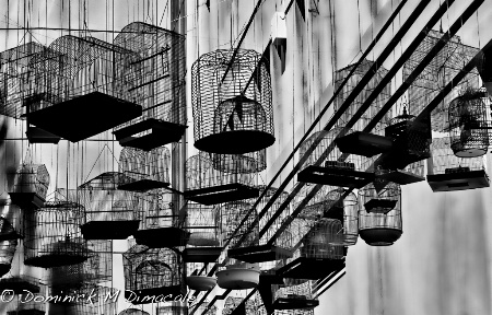 ~ ~ HANGING CAGES ~ ~