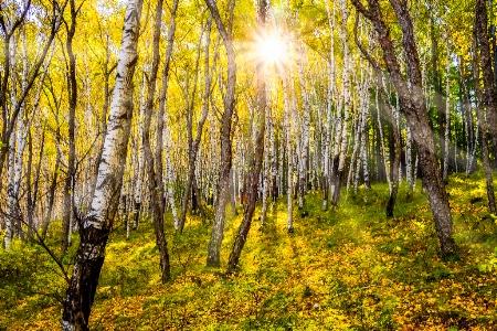 Birch forest park