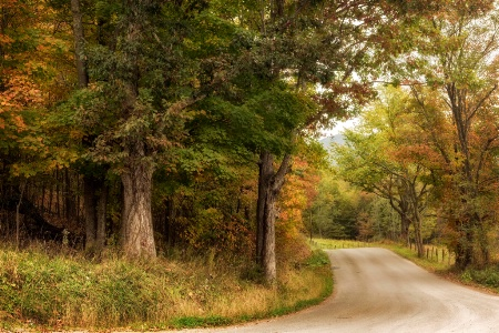 Anyone's Road
