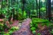 Path On Flowerpot...