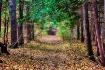 Path In The Fall