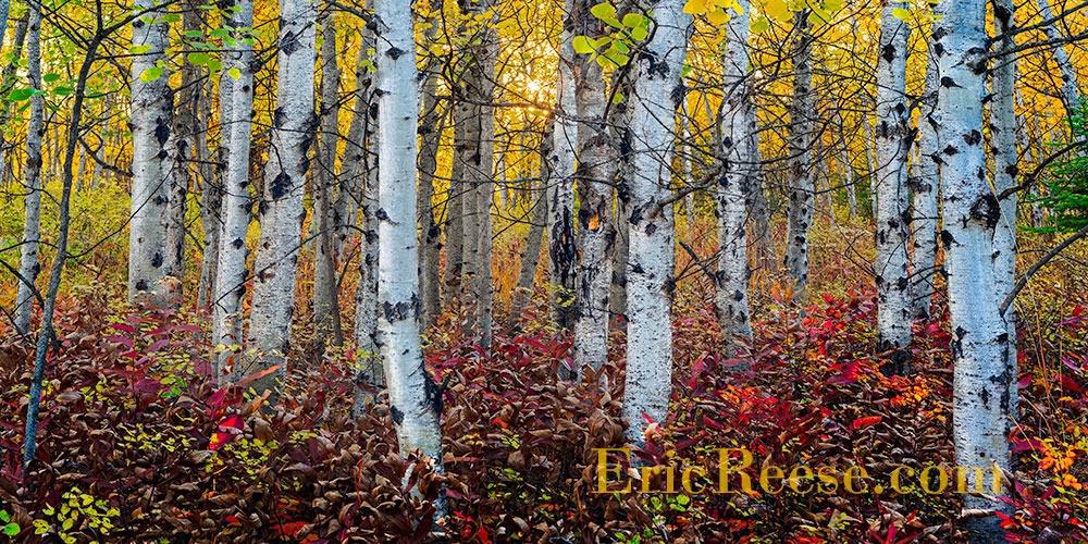 Whitefish-Aspens - ID: 15466973 © Eric Reese