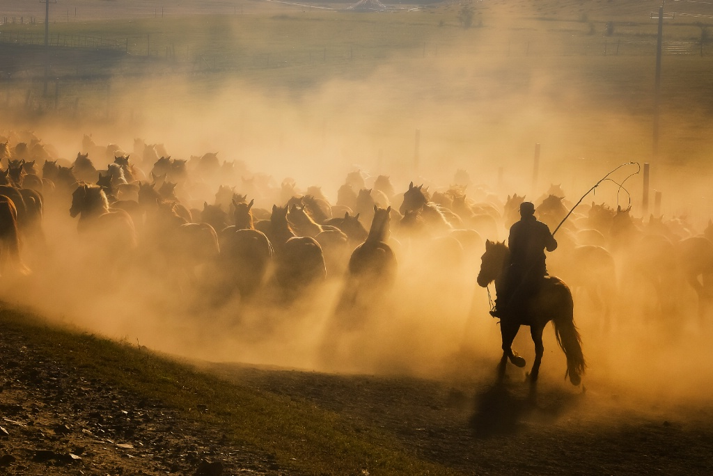 Horse rancher life
