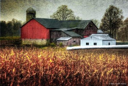 Amish Farm