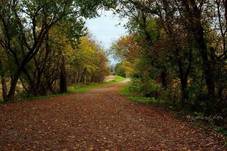 Beyer Road