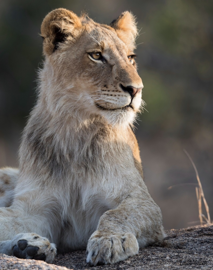 The Future King - ID: 15467547 © Louise Wolbers