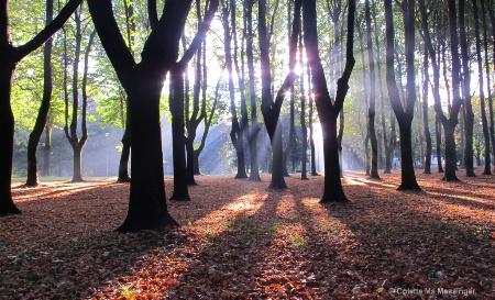 SUNRISE THROUGH THE TREES 17.JPG