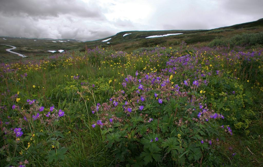 Tundra - ID: 15468588 © David Resnikoff