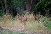 Doe at a Distance