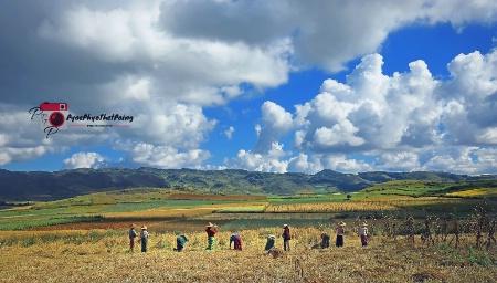 Harvest workers