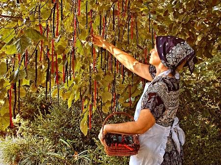 Twisted Licorice Harvest