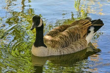Goosey Goose