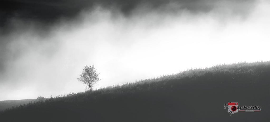 Lonely tree Foggy landscape  - ID: 15473311 © Pyae Phyo Thet Paing