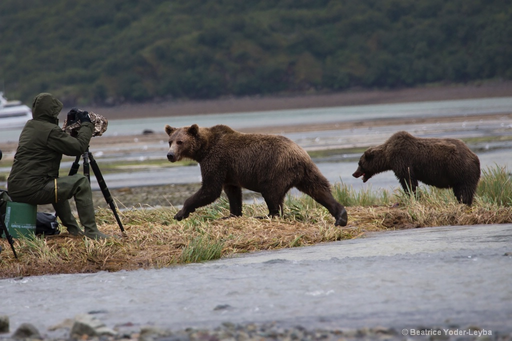 Bears and Photographers - ID: 15473983 © Beatrice Yoder-Leyba