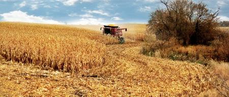 Capturing the Harvest