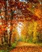 Fall's Blanke...