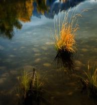 Teton Grasses