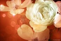 White Rose with Dogwoods