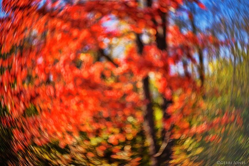 Impressionist Tree Abstract