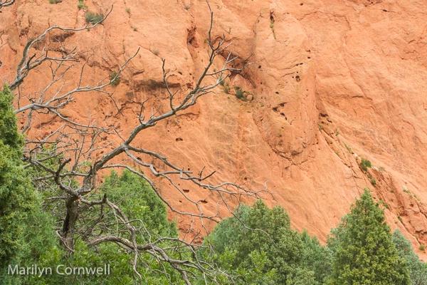A Tree was here - ID: 15485338 © Marilyn Cornwell