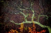 Dogwood Fractal